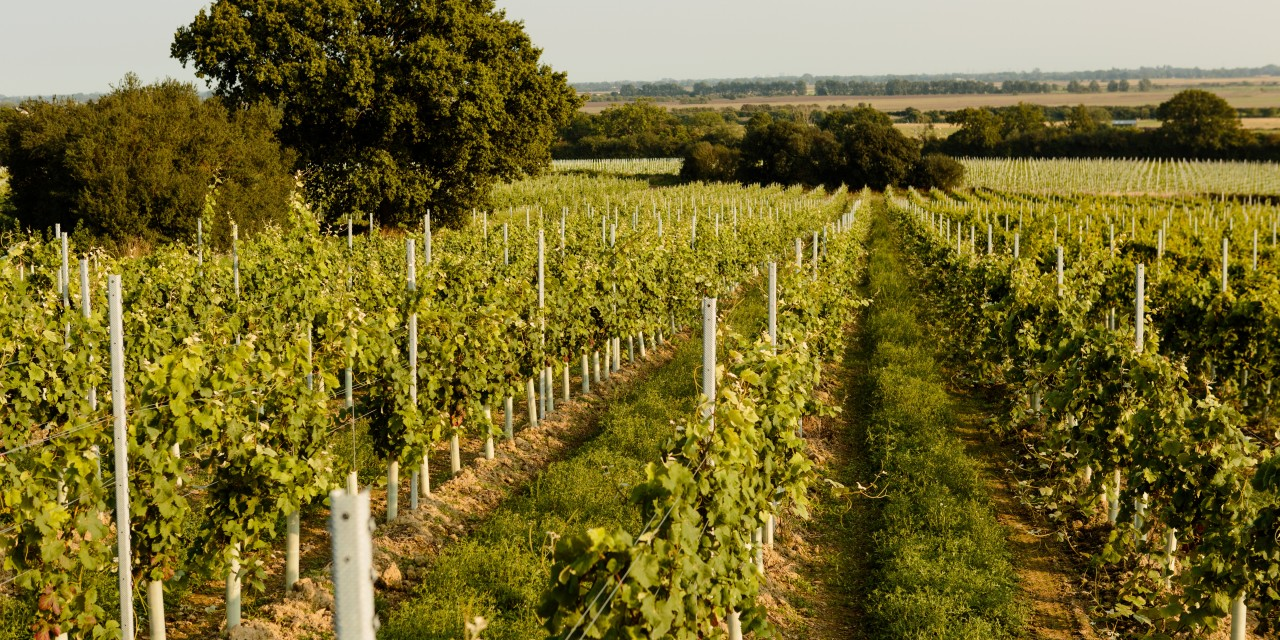 English wine comes of age