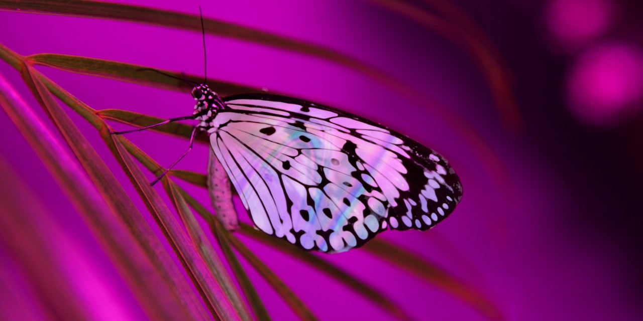 Pleasures of the Nectar Dome